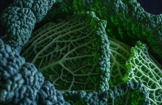 Dieta ketogeniczna – najczęściej popełniane błędy
