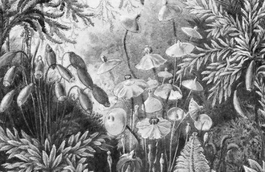 Jak wiązać jedwabne apaszki? Inspiracje od Wall Art